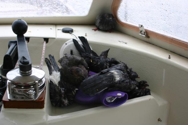Birds cuddling up on the hot water bottle