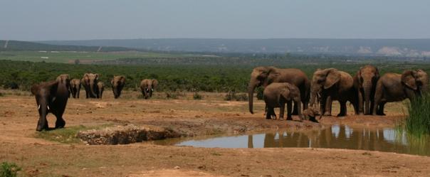Addo Elephant Park 1