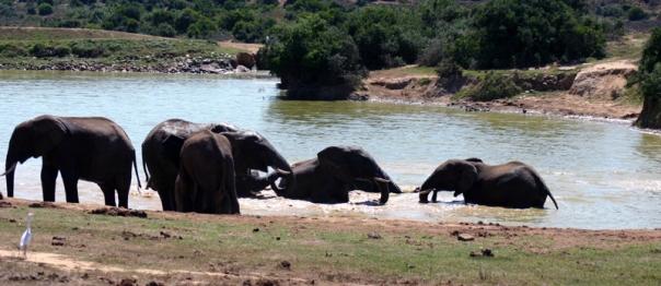 Addo Elephant Park 2