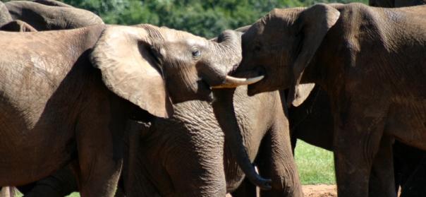 Addo Elephant Park 3