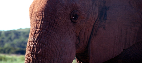 Addo Elephant Park 4